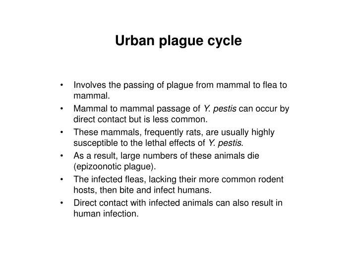 Urban plague cycle