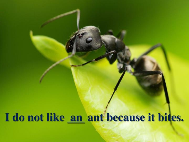 I do not like ___ ant because it bites.