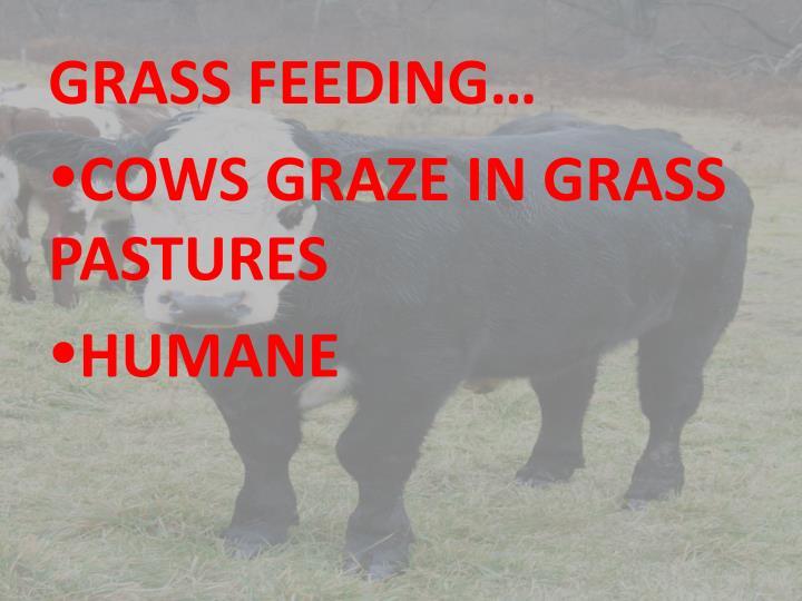GRASS FEEDING…