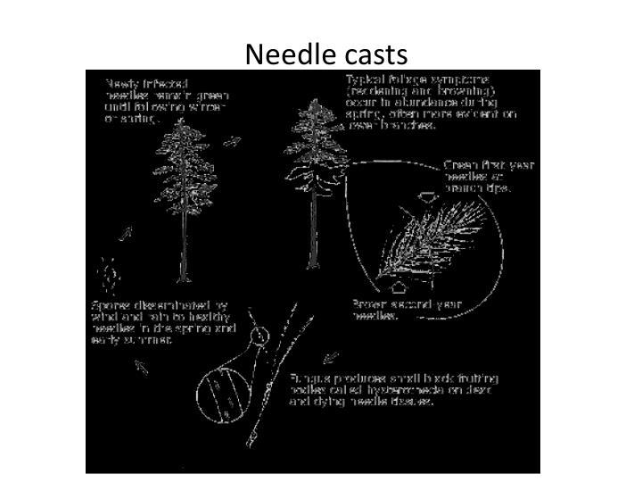 Needle casts