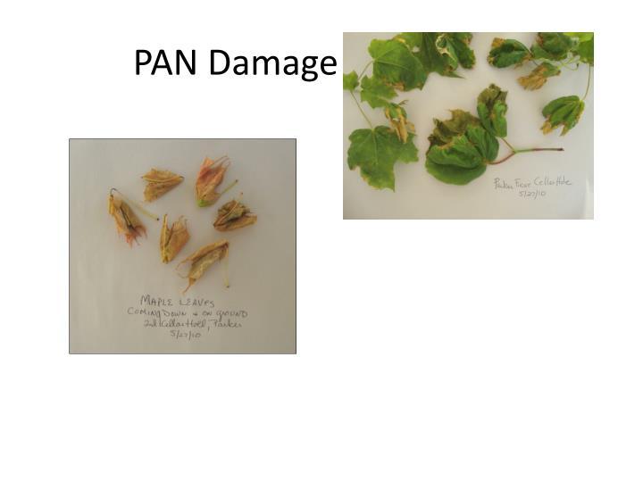 PAN Damage