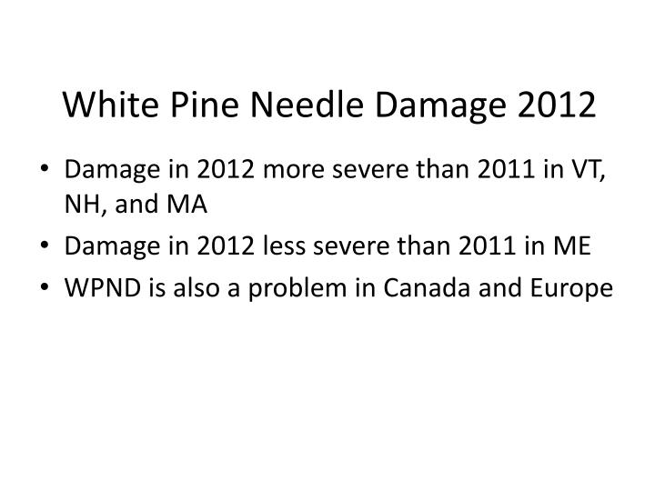 White Pine Needle Damage 2012