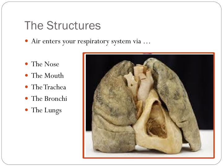 The Structures