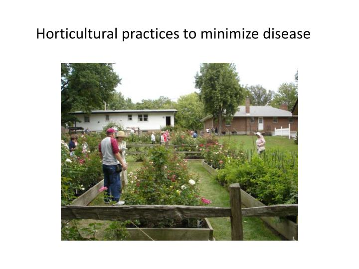 Horticultural practices to minimize disease