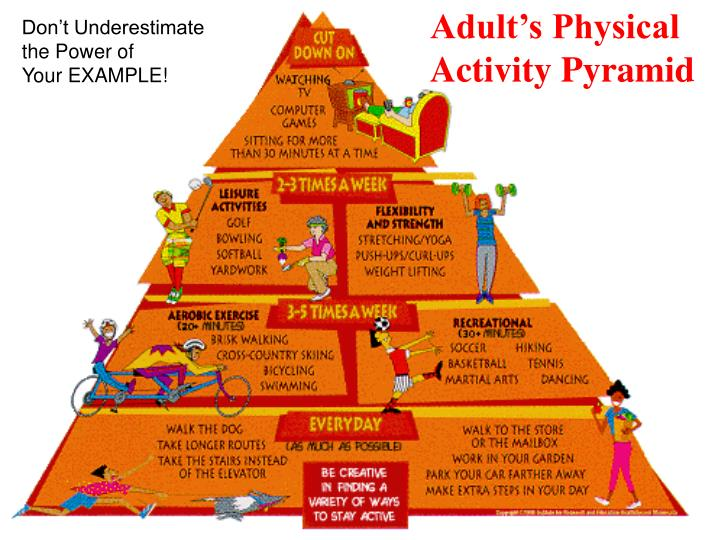 Adult's Physical