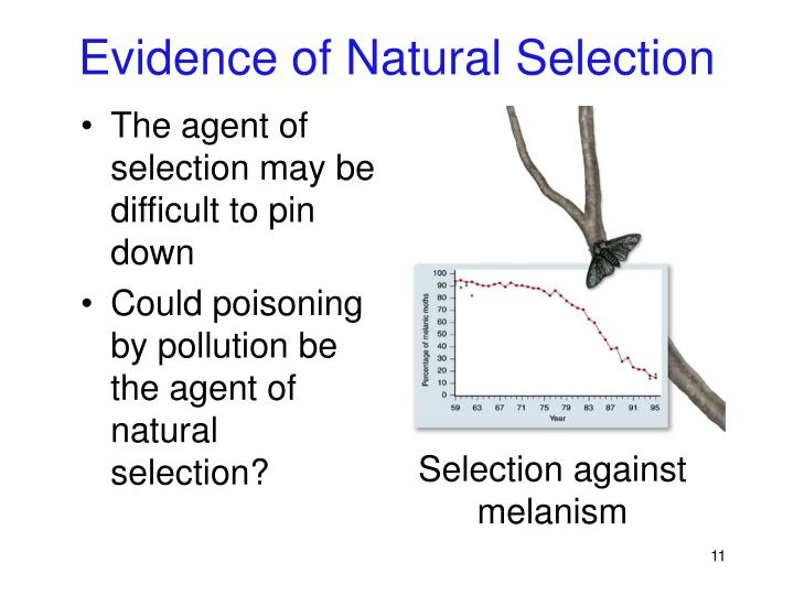 Evidence of Natural Selection