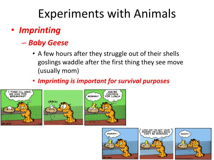 Experiments with Animals