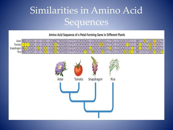Similarities in Amino Acid Sequences