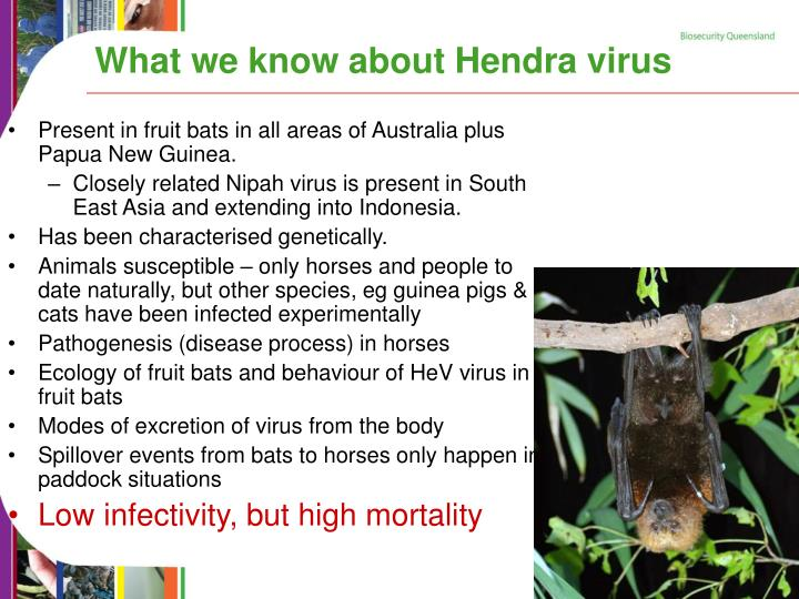 What we know about Hendra virus