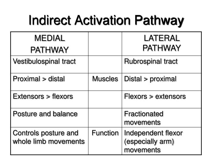 Indirect Activation Pathway