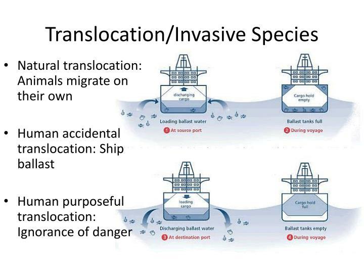 Translocation/Invasive Species