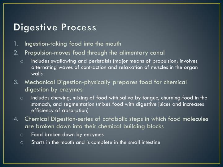Digestive Process