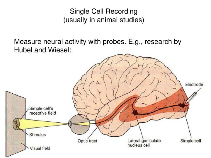 Single Cell Recording