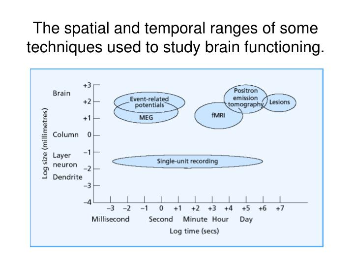 The spatial and temporal ranges of some techniques used to study brain functioning.