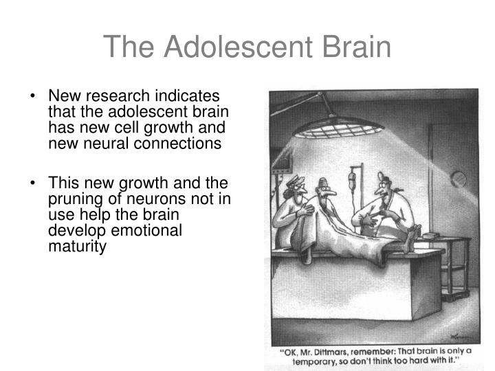 New research indicates that the adolescent brain has new cell growth and new neural connections
