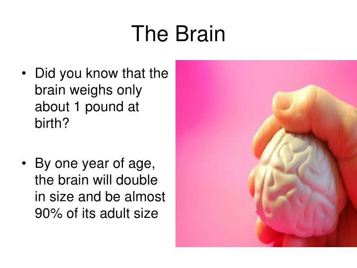 Did you know that the brain weighs only about 1 pound at birth?