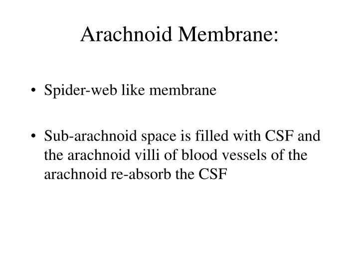 Arachnoid Membrane: