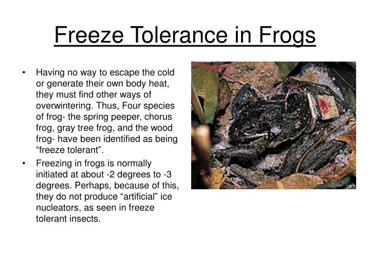 Freeze Tolerance in Frogs