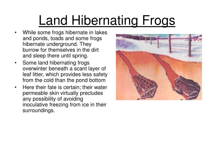 Land Hibernating Frogs