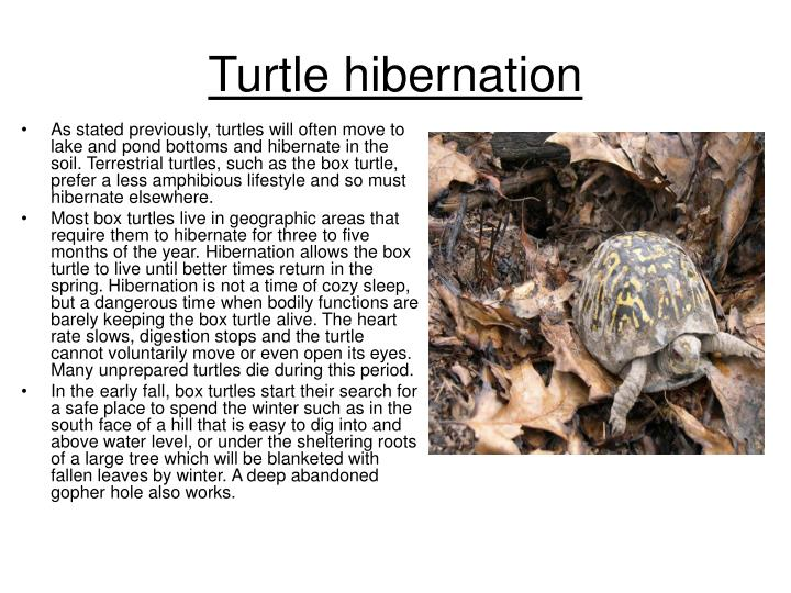 Turtle hibernation