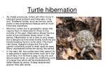 turtle hibernation