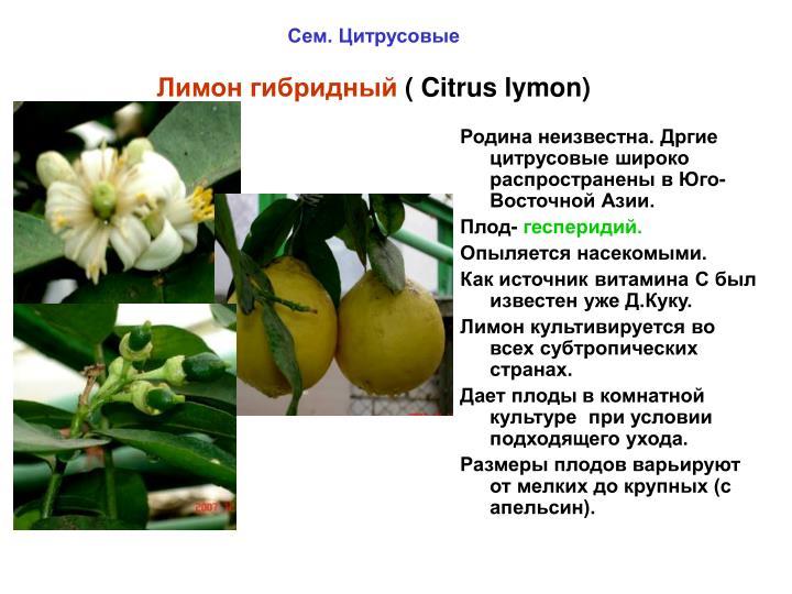 Родина неизвестна. Дргие цитрусовые широко распространены в Юго-Восточной Азии.