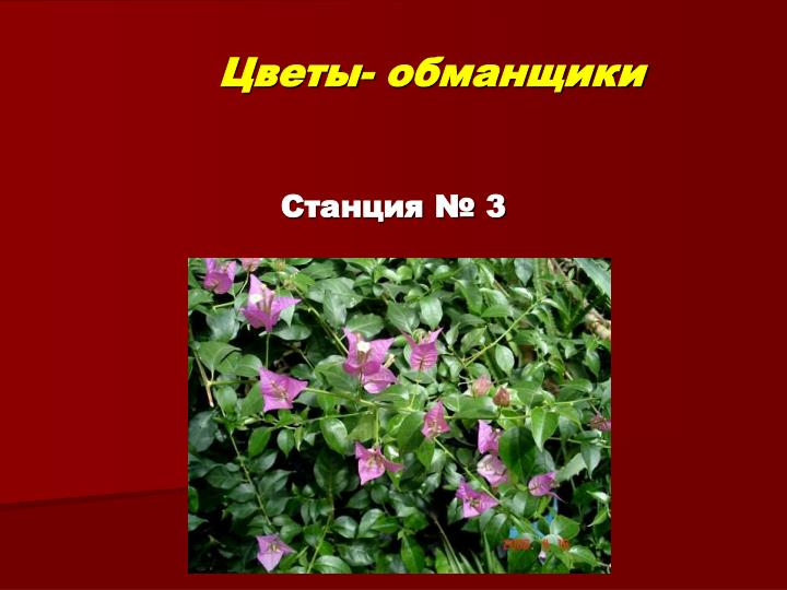 Цветы- обманщики