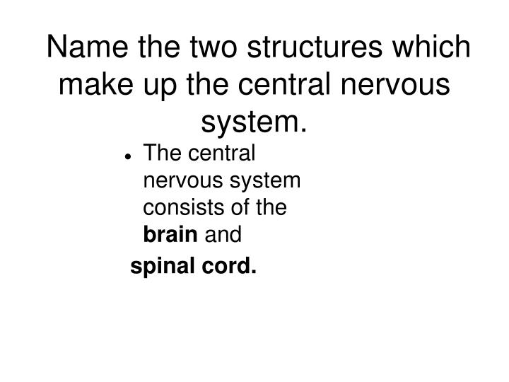 Name the two structures which make up the central nervous system.