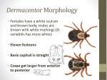 dermacentor morphology