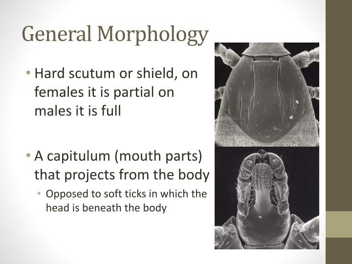 General Morphology