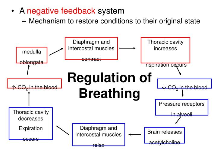 control mechanism s powerpoint Dreaming occurs is due to increased brain activity, but voluntary muscles  become paralyzed sleep control mechanisms encephalitis lethargica.