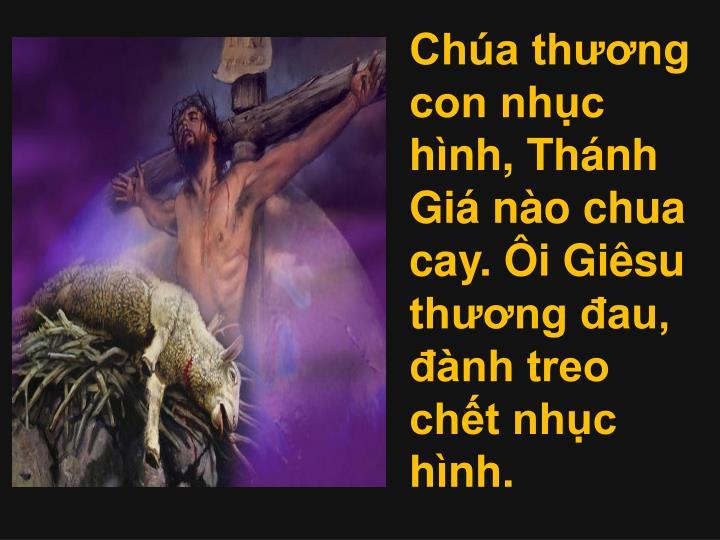 Cha thng con nhc hnh, Thnh Gi no chua cay. i Gisu thng au, nh treo cht nhc hnh.