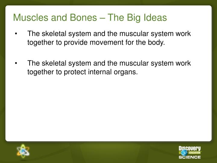 Muscles and bones the big ideas