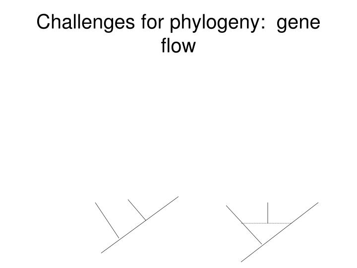 Challenges for phylogeny:  gene flow