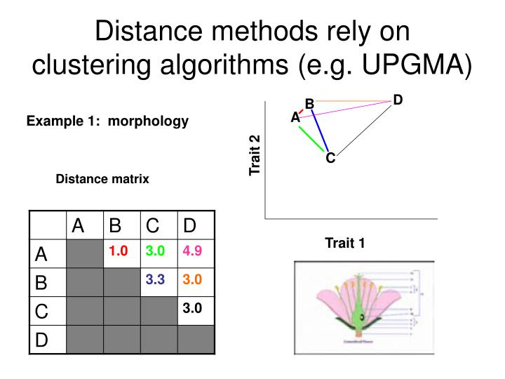 Distance methods rely on clustering algorithms (e.g. UPGMA)