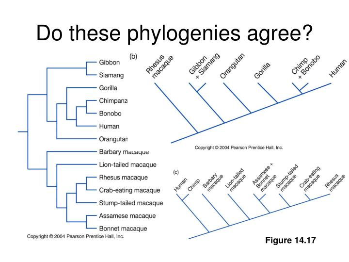 Do these phylogenies agree?