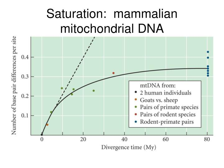 Saturation:  mammalian mitochondrial DNA