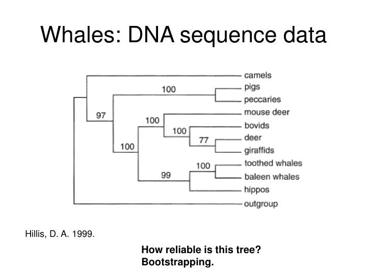 Whales: DNA sequence data