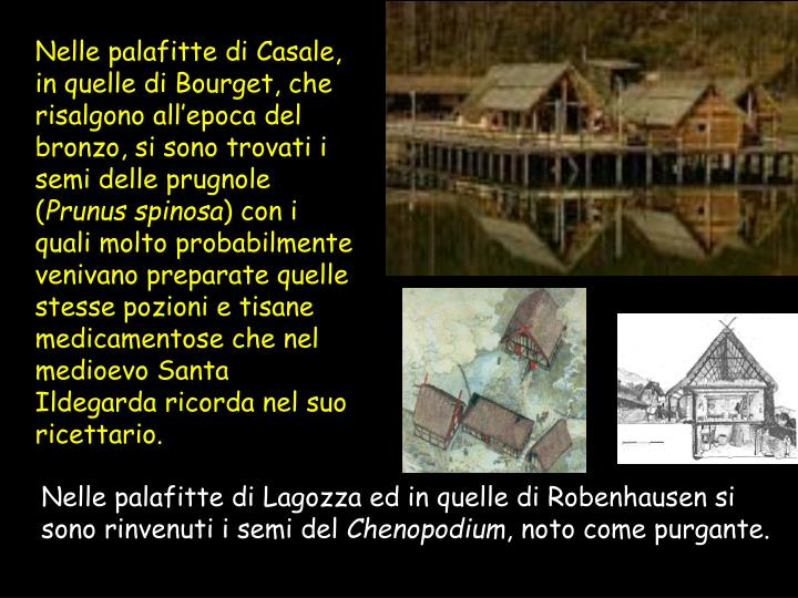 Nelle palafitte di Casale, in quelle di Bourget, che risalgono all'epoca del bronzo, si sono trovati i semi delle prugnole (
