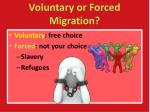 voluntary or forced migration