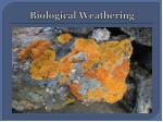 biological weathering1