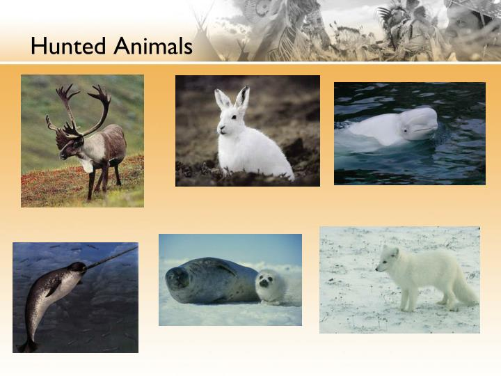 Hunted Animals