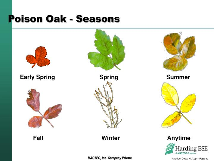 Poison Oak - Seasons