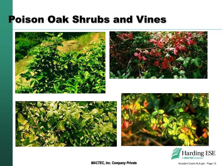 Poison Oak Shrubs and Vines