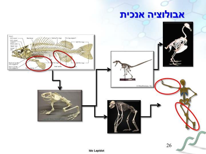 אבולוציה אנכית