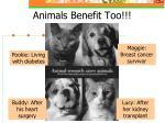 animals benefit too