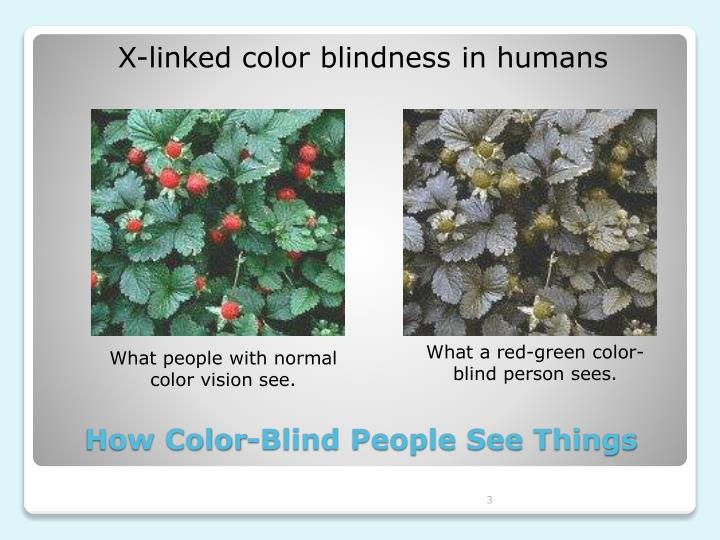 X-linked color blindness in humans