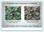 how color blind people see things