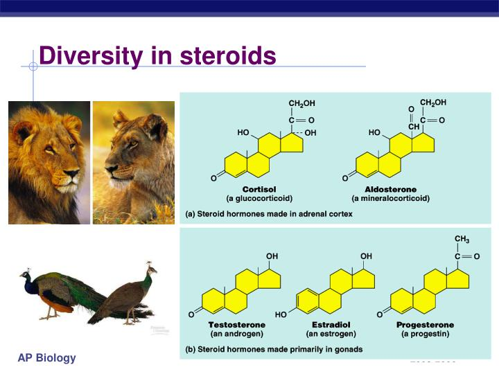 Diversity in steroids