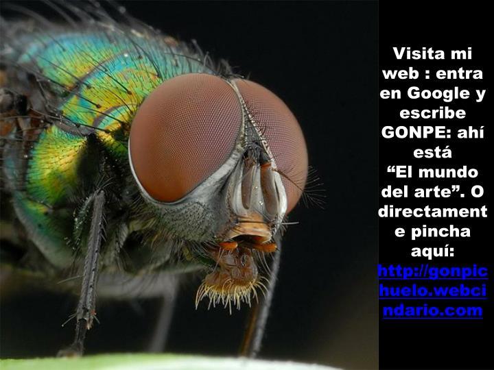 Visita mi web : entra en Google y escribe GONPE: ahí está